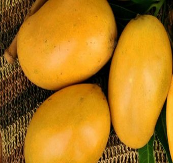Know your mangoes: The best Mango varieties in Bangalore